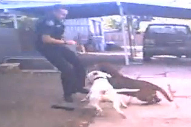 Raw Video Of Pit Bull Attack, Nampa Police Department Screen Shot